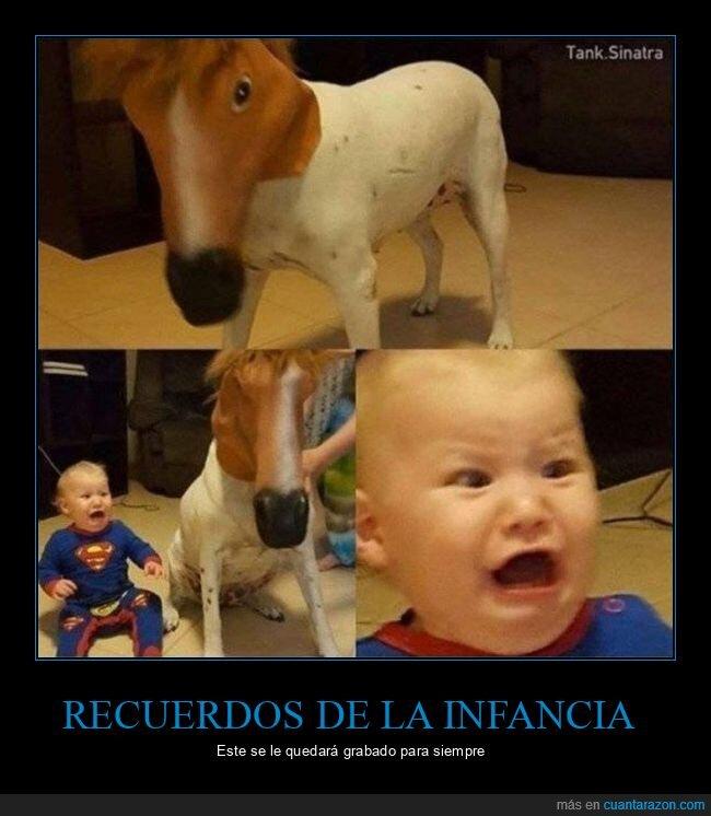 máscara de caballo,niño,perro