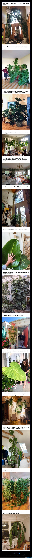 crecer,grandes,plantas