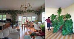 Enlace a Personas que adoran las plantas y han conseguido que crezcan hasta ser espectaculares