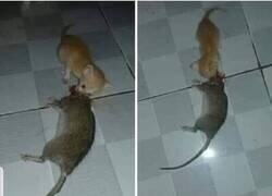 Enlace a Este gato las mata callando