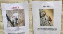 Enlace a Este barrio es testigo de una pelea de exnovios a través de carteles con la desaparición del perro de la pareja
