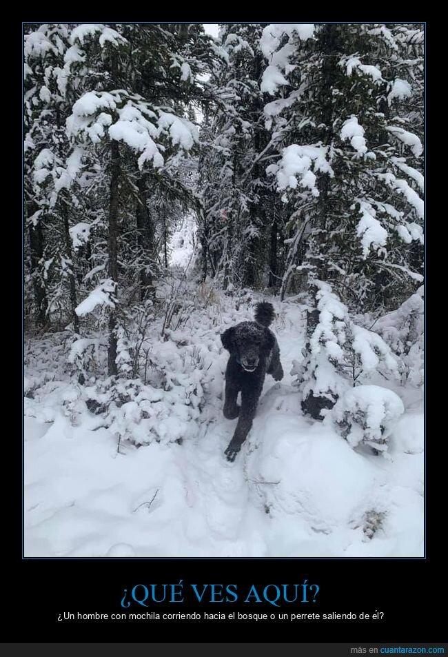 corriendo,foto,hombre,mochila,nieve,perro