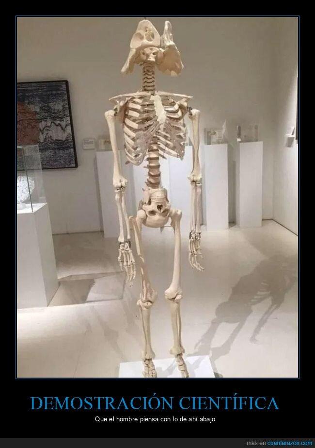 cabeza,esqueleto