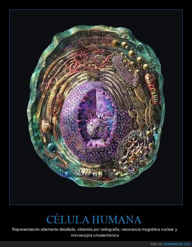 célula humana,ciencia,curiosidades