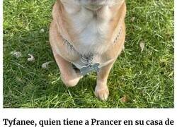 Enlace a Esta campaña de adopción revela todos los defectos de este chihuahua endemoniado y se vuelve viral
