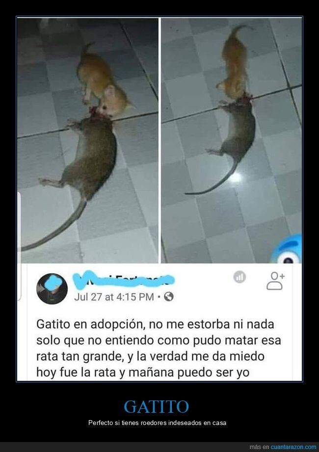 gatos,gigante,rata,wtf