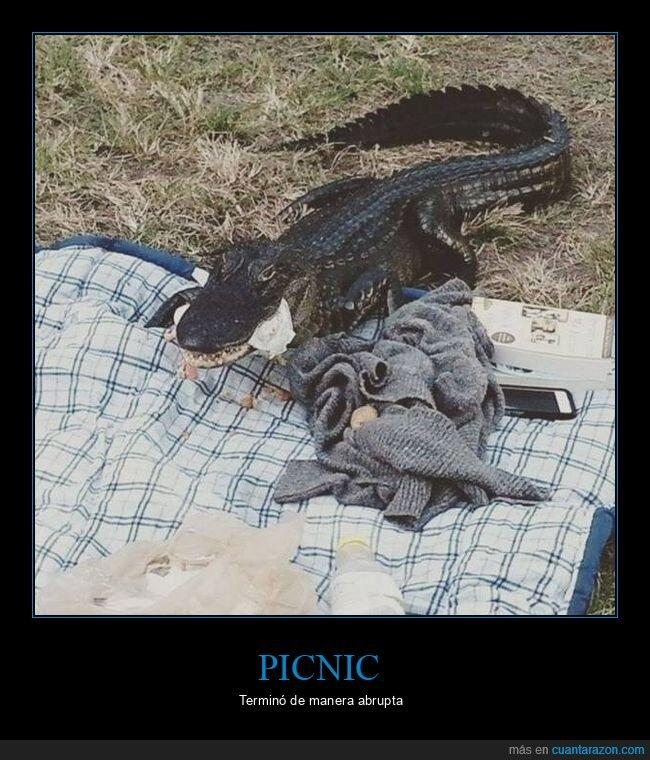 cocodrilo,picnic,wtf