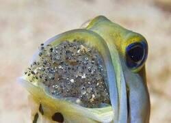 Enlace a Este pez no está comiendo