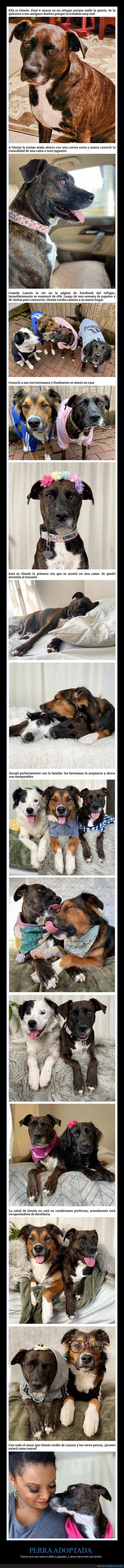 adopción,perro