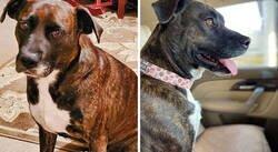 Enlace a Esta mujer adoptó un perro que nunca tuvo una cama mullida o juguetes, y ahora tiene toda una familia