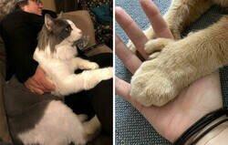 Enlace a Gatos que no entienden lo GRANDES que son
