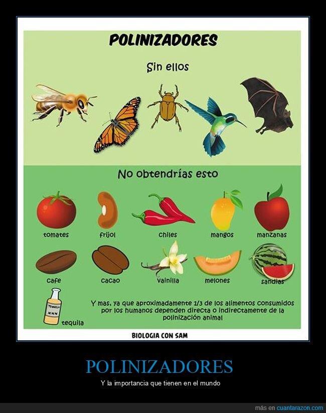comida,frutas,polinización,polinizadores