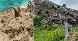 Enlace a Socotra, el paraíso casi inaccesible con un paisaje que parece de otro mundo