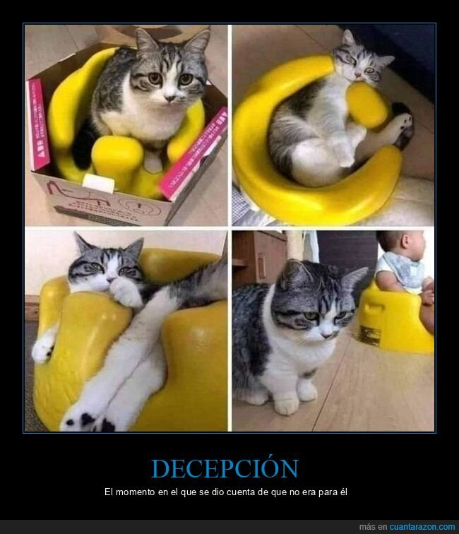 bebé,decepción,gato