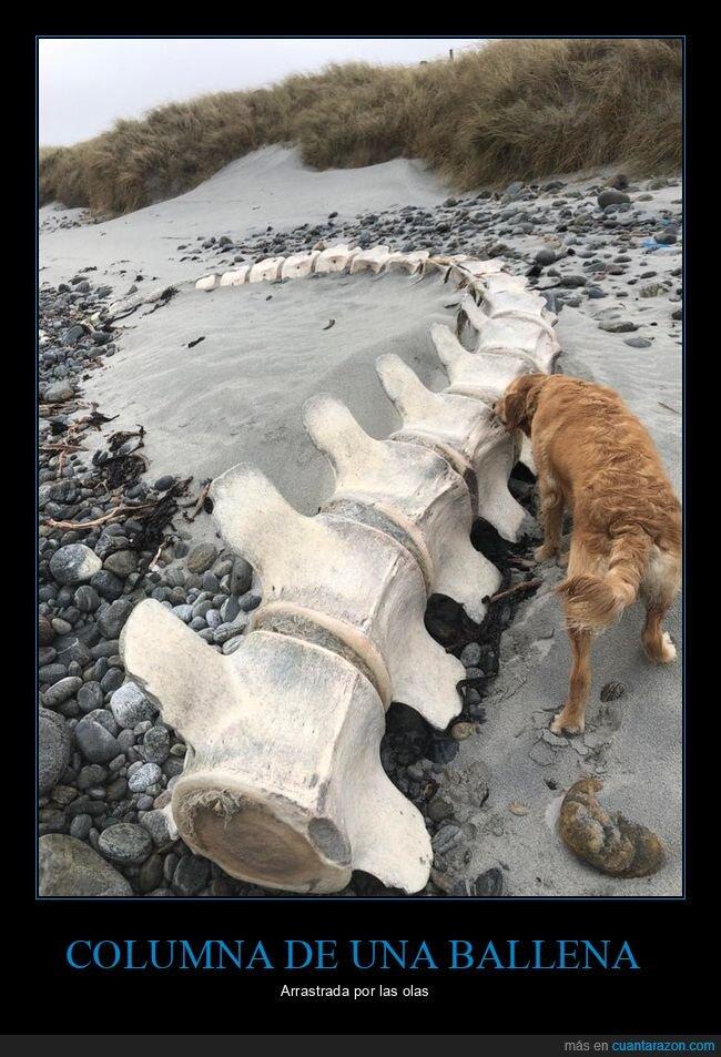 ballena,columna vertebral,playa