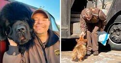 Enlace a Conductores de UPS que se encontraron perros en sus rutas
