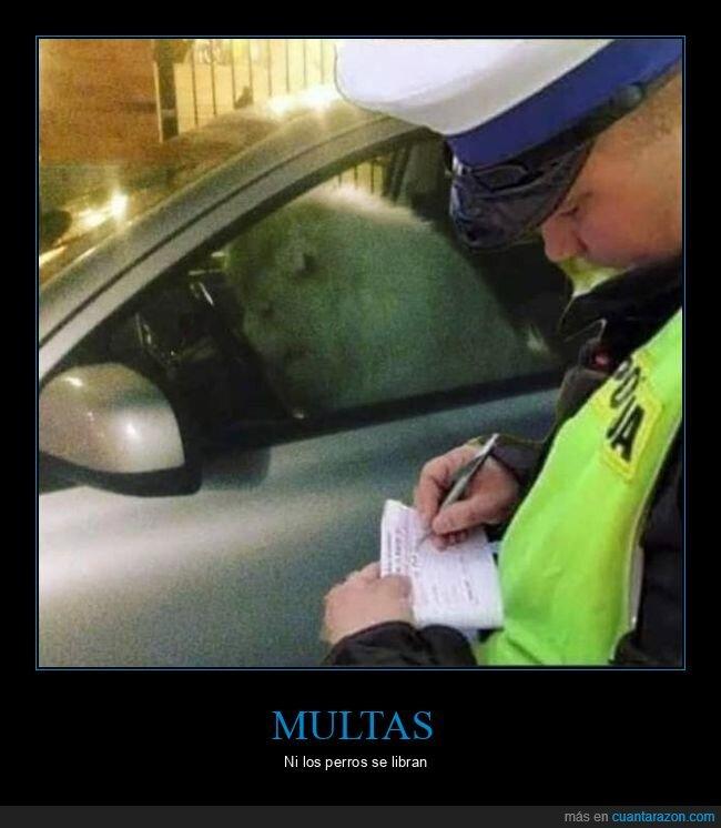 coche,multa,perro,policía