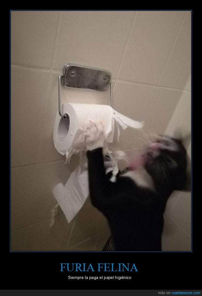 furia,gato,papel higiénico