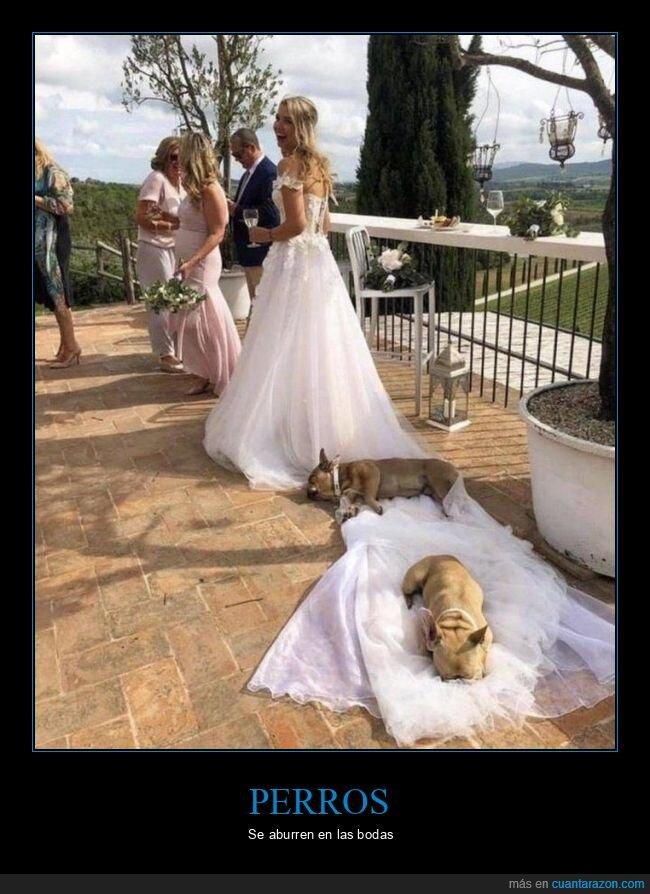 boda,cola,perros,vestido