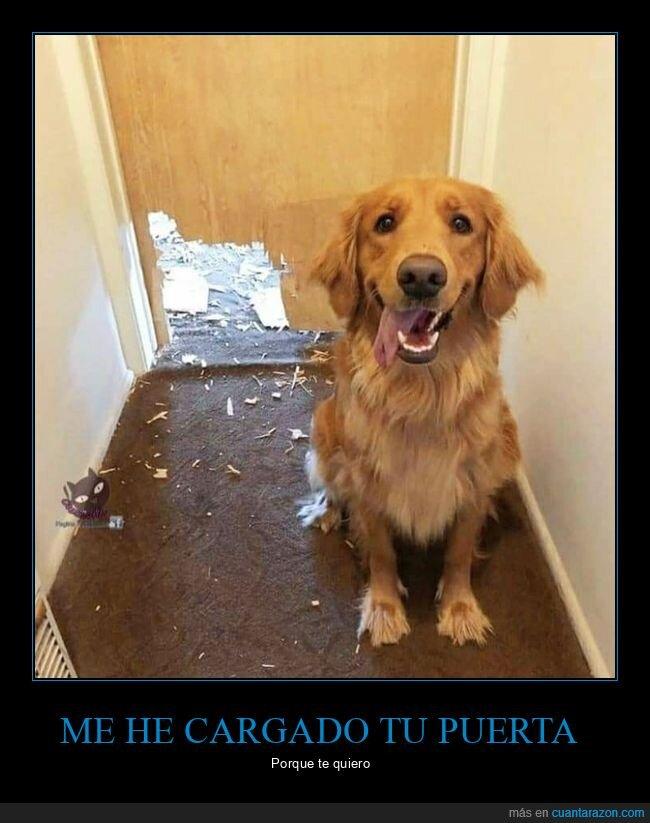 fails,perro,puerta