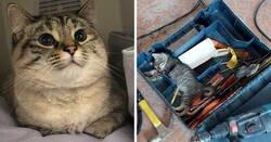 Enlace a Gatos trabajadores que son unos auténticos profesionales