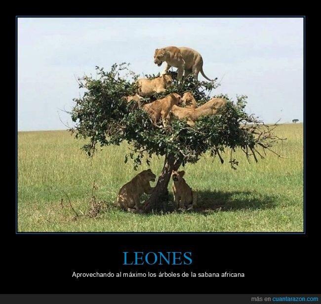 árbol,leones,wtf