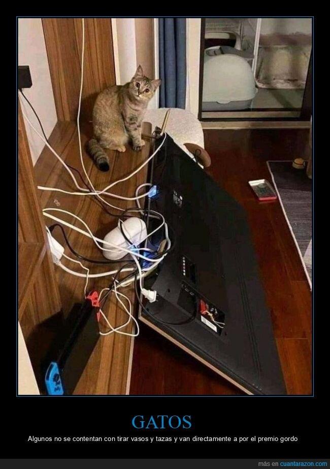 fails,gato,televisión
