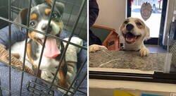Enlace a Fotos de las adopciones de mascotas más reconfortantes del mes de Abril