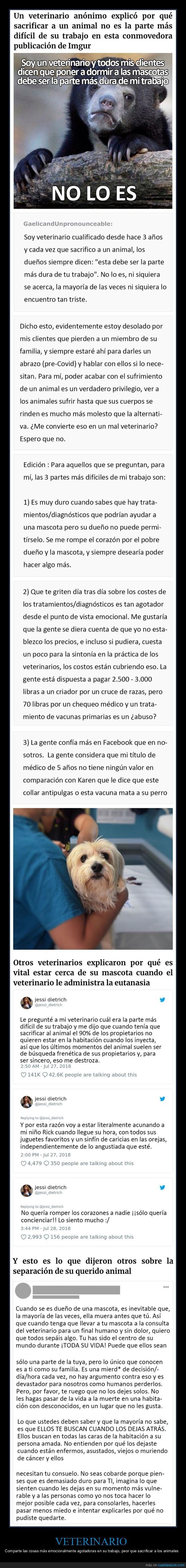 animales,trabajo,veterinario