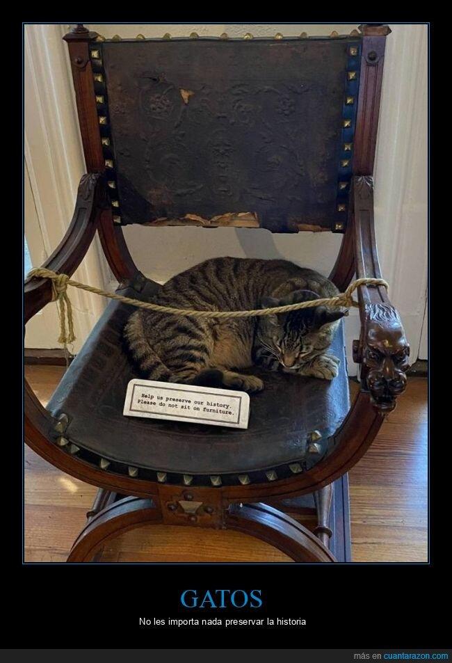 cartel,gato,sentado,silla