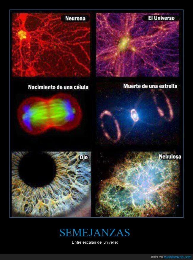 células,parecidos,universo