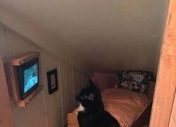 Enlace a Habitación personalizada con televisión incluida