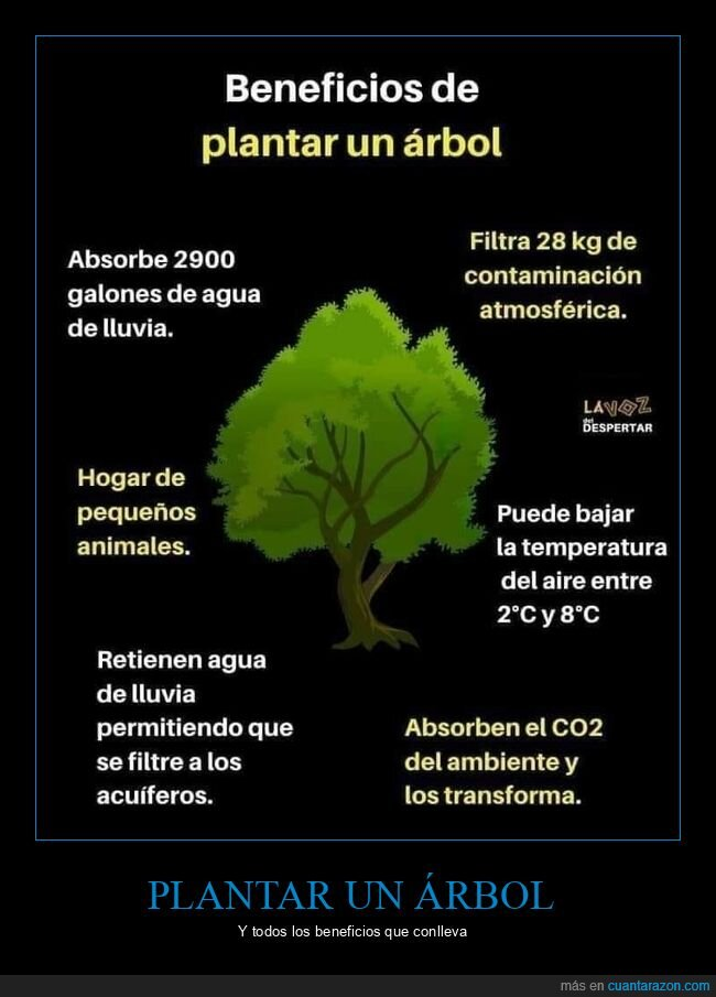 árbol,beneficios,plantar