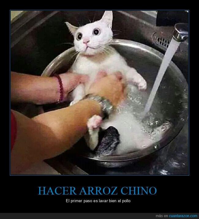 arroz,chinos,gatos,pollo