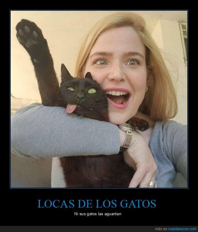 gato,selfie,wtf