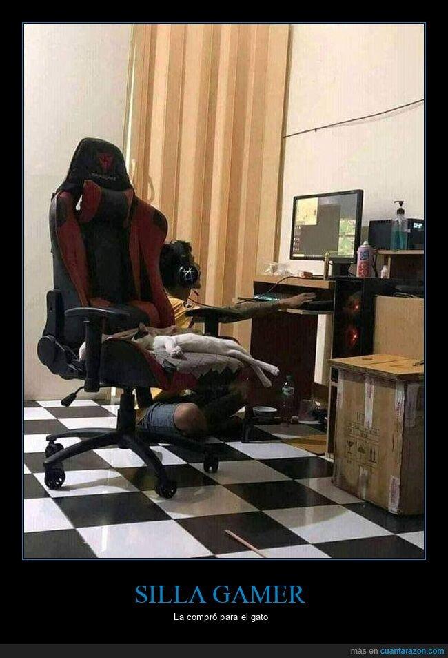 gamer,gato,silla