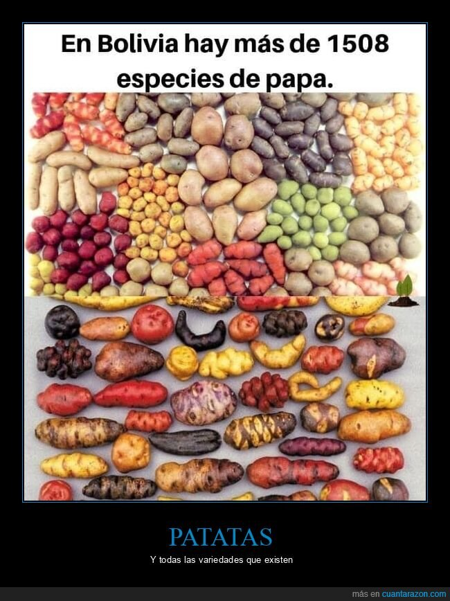 bolivia,especies,patatas