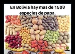 Enlace a La diversidad de las patatas