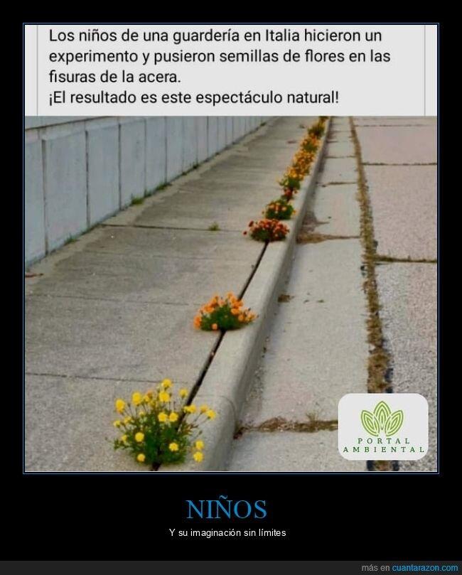 acera,flores,guardería,niños,semillas