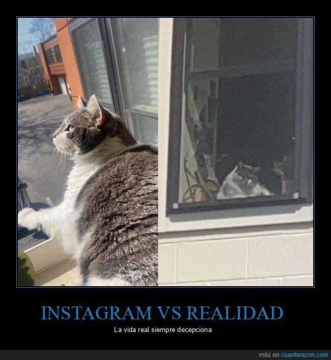 gato,instagram,realidad