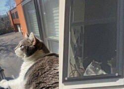 Enlace a Gato instagramer