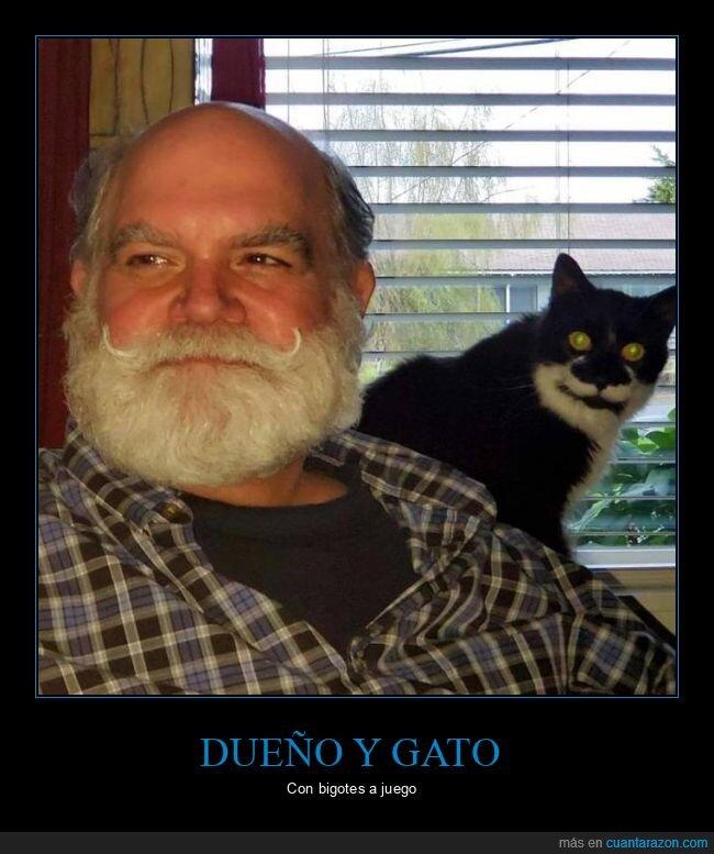 bigote,dueño,gato