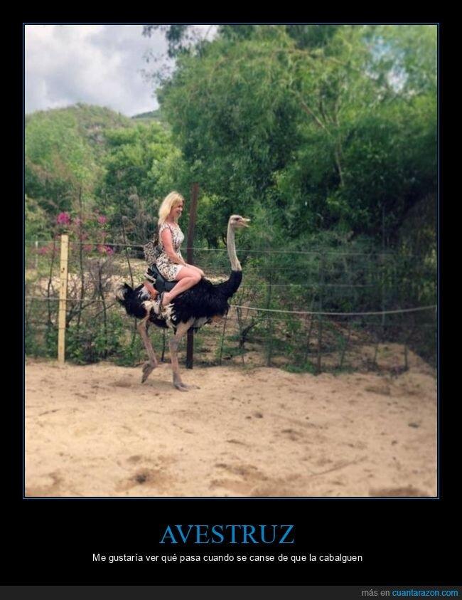 avestruz,cabalgando