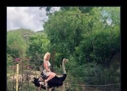 Enlace a A lomos del avestruz