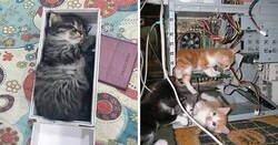 Enlace a Gatos en lugares insólitos