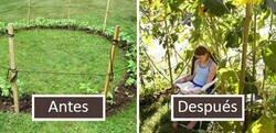 Enlace a Personas con un toque para las plantas comparten ideas geniales de jardinería