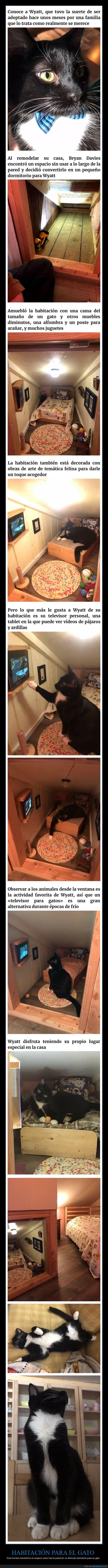 gato,habitación,televisión