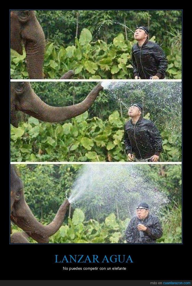 agua,elefante,trompa