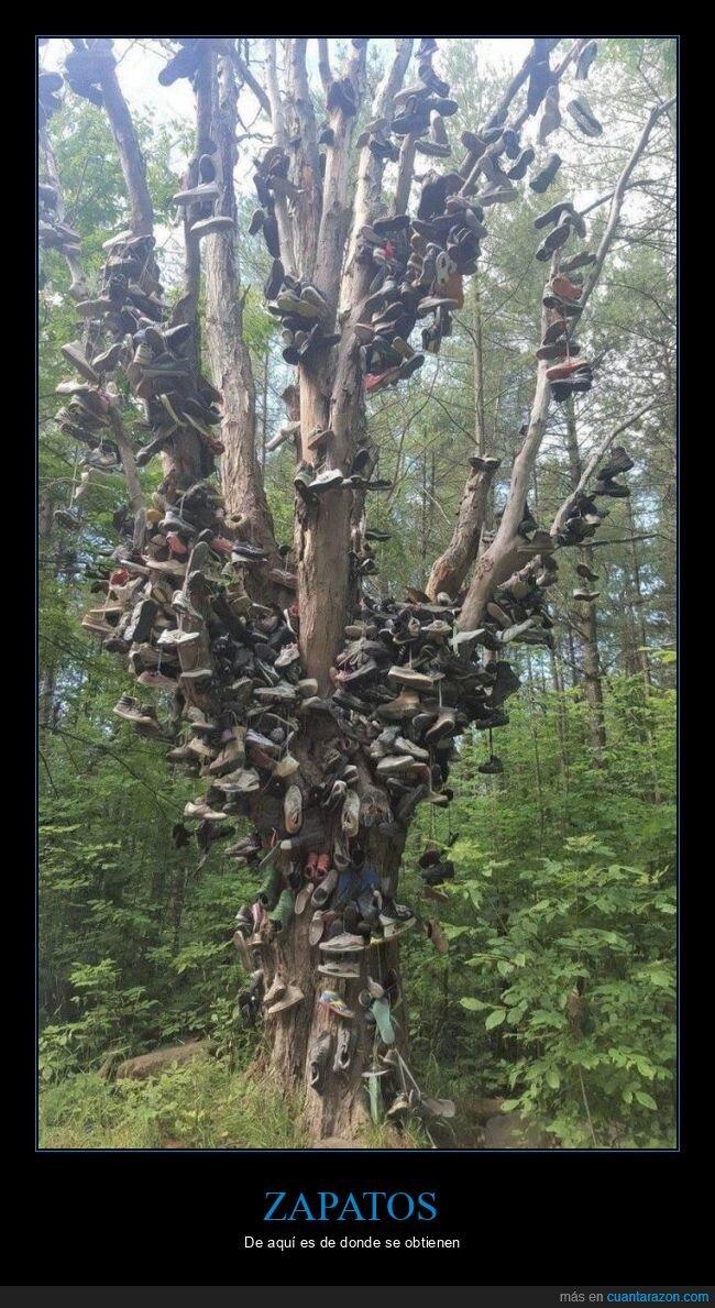 árbol,wtf,zapatos