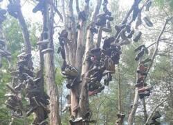 Enlace a El árbol del calzado